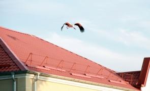 Аист на крыше – счастье под крышей