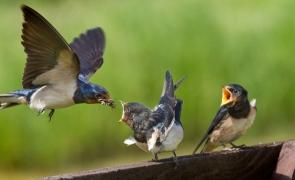 Очерки из жизни птиц, или Чем занять себя на самоизоляции